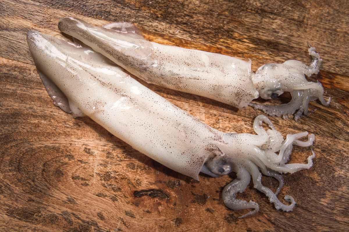 calamar patagonico